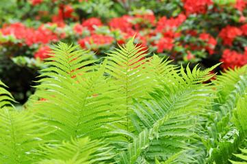 Stimmungspflanzen. Grüne Farne