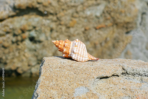 shell at the stone near Black sea