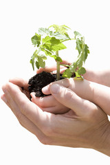 Person cupping child's hands holding plant, close-up of hands, cut out