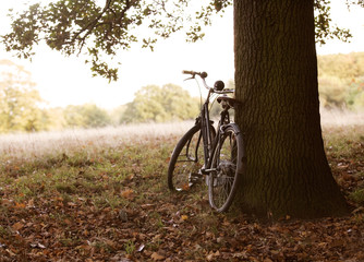 A bicycle leaning against a tree in autumn time