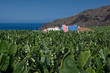 La Palma Tazacorte