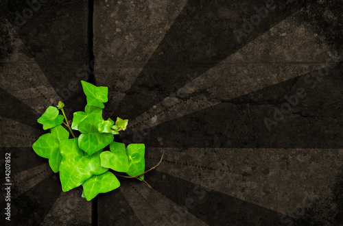 green ivy on brown grunge background
