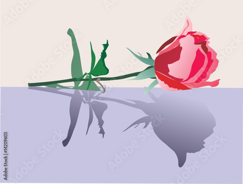 red rose with reflection illustration