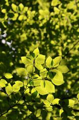 Grüne Zweige