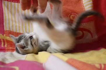 Giocando con un micino