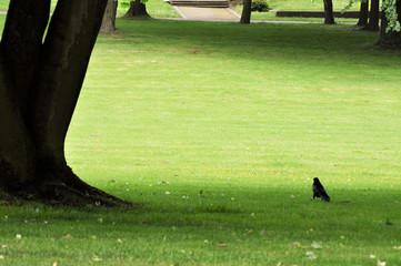 Bäume im Park. Einsamkeit