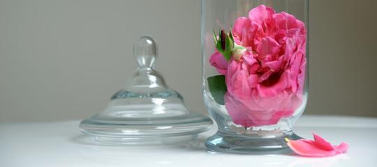 coupe et rosae