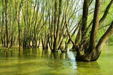 Bäume im Wasser in der Au