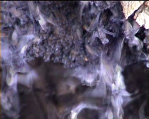 Masses of bats