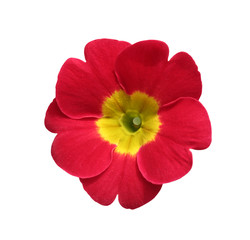 beautiful isolated red and yellow round flower isolated