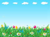 Fototapety Fresh green grass and wild flowers meadow background