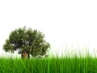 3d green grass with a natural baobab tree isolated