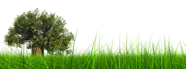 3d green grass with a natural brown baobab tree isolated