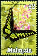 Malaysia. Papillon tropical. Timbre postal oblitéré.