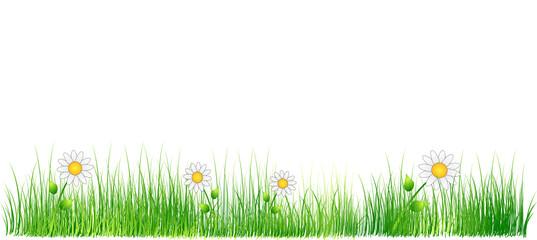 Grass and Daisy Vector