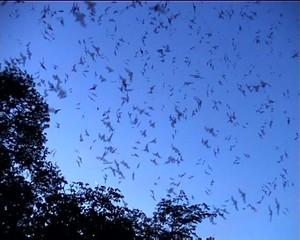 Returning bats