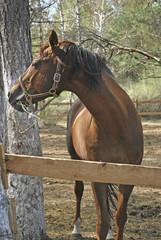 stallion in roundup