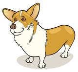 Dog breeds: Pembroke Welsh Corgi poster