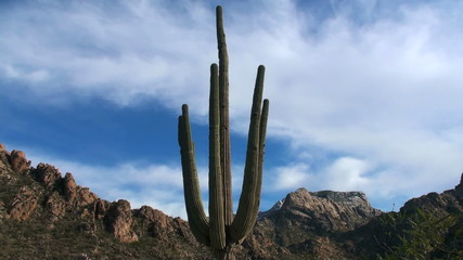 Saguaro in desert landscape time lapse - HD
