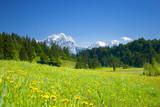 alpen panorama mit wiese im vordergrund