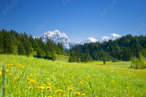 alpen panorama mit wiese im vordergrund © momanuma