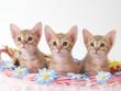 花飾りのついたカゴに入った3匹の猫