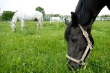 Three horses eating grass in the meadow - 14312489