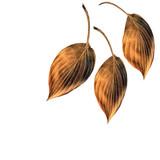 Burnished Copper Hosta  Leaves poster