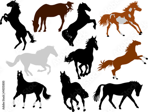 horses collection vector