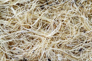 Pattern of white oat roots. Close up background