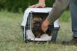chiot cairn terrier couché dans sa cage de transport