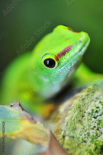 Staande foto Kameleon cute green gecko