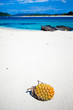 Tropical fruit on deserted coral island of Japan