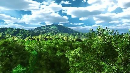 forest rural