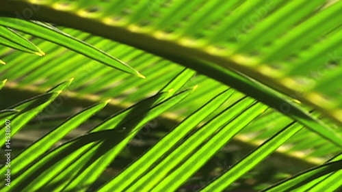 Palm fronds in the wind - HD