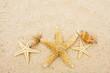Starfish - 14364696