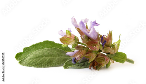 Sage flower and leaves