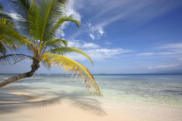Playa Tropical Perfecta