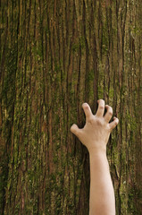 Hand clawing up a cedar tree trunk