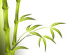 roleta: bamboo