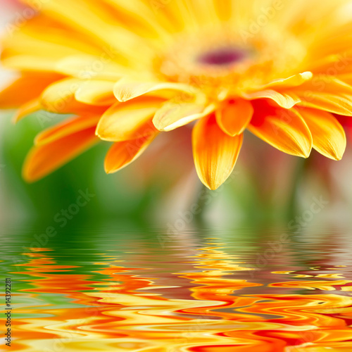 Tuinposter Madeliefjes Closeup photo of yellow daisy-gerbera