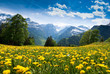 canvas print picture - View from Braunwald