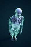 3D rendering of a male figure with visible skeleton structure