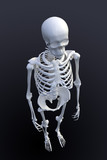3D rendering of a human skeleton