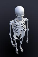 3D rendering of a human skeleton