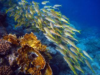 Fischschwarm am Riff