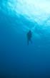 Diver Silouette
