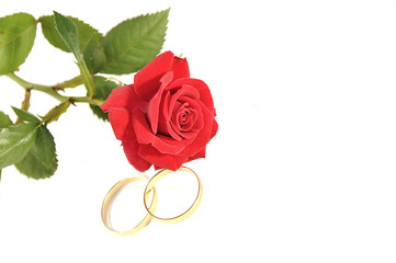 Wedding rings and rose isolated over white with space for text.