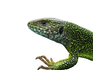 My reptile