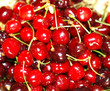 Fresh beautiful cherries